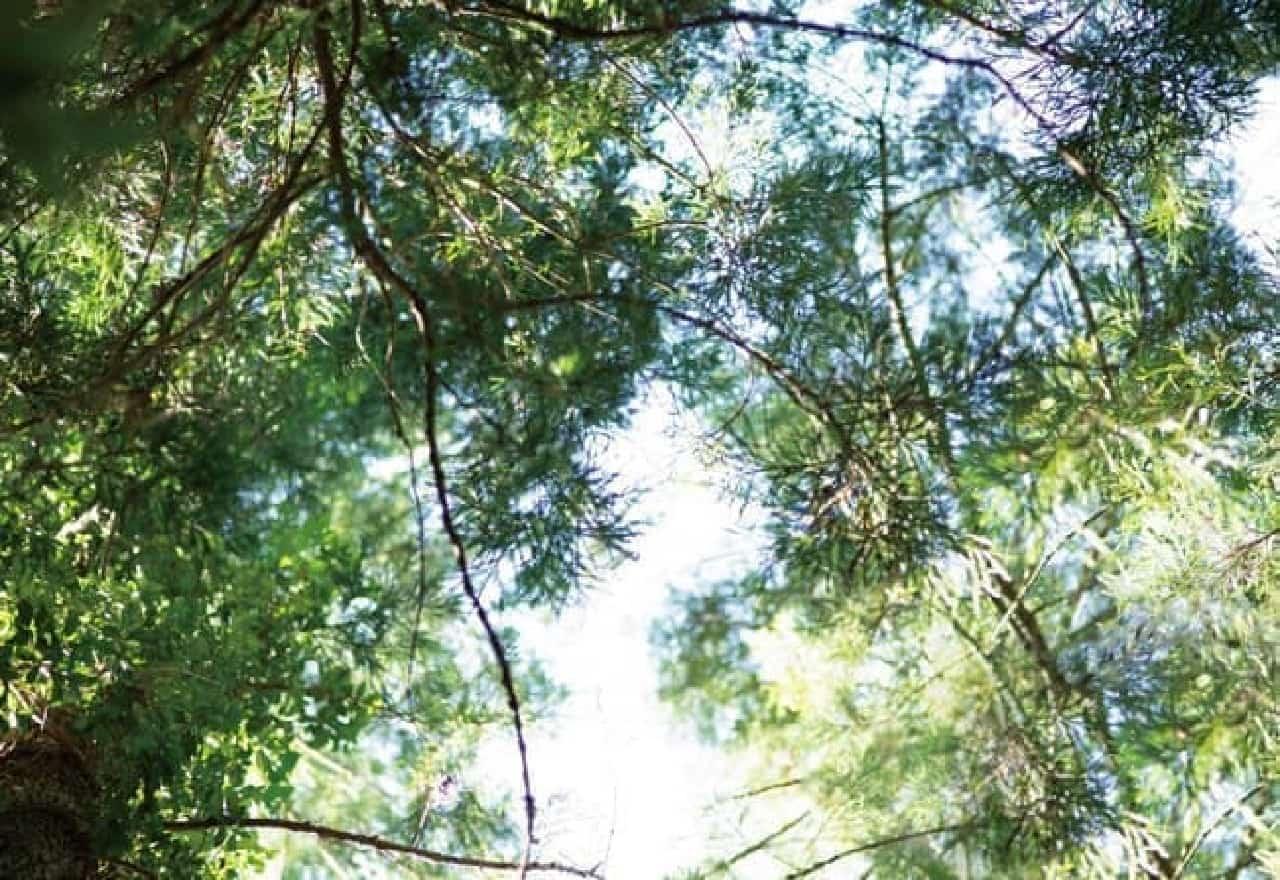 日差しが差し込む森の中