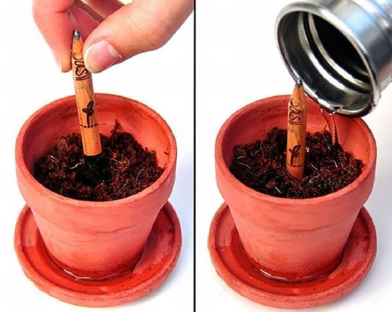 (写真左)植木鉢に鉛筆を入れ  (写真右)水を入れます
