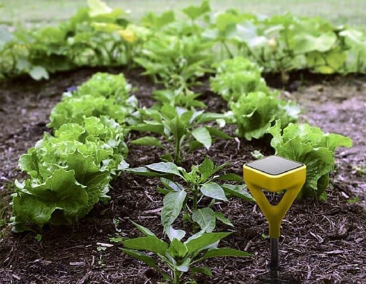 「Edyn」は、庭の土中状況を測定する「センサー」