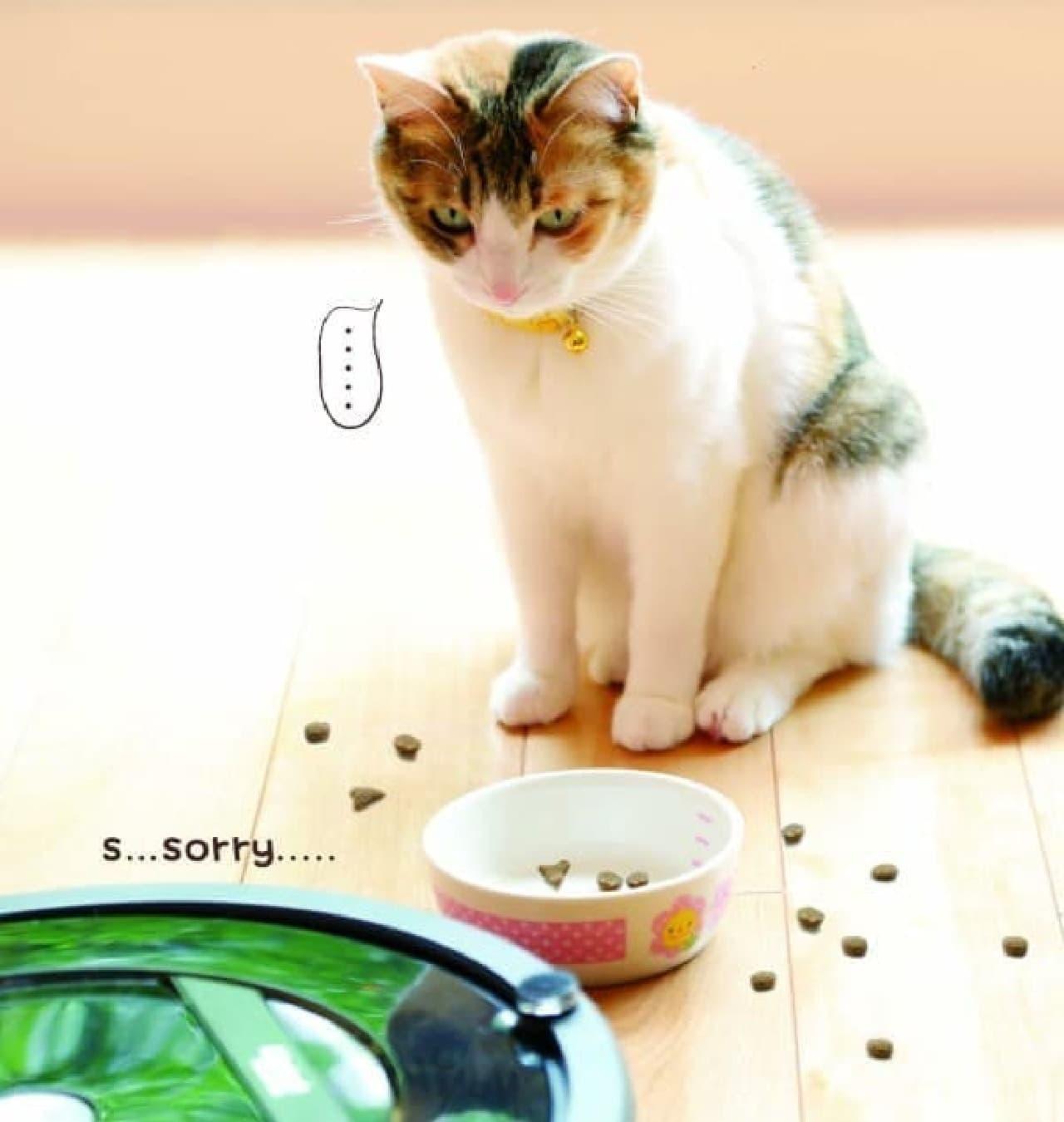 ルンバ、猫ににらまれる!