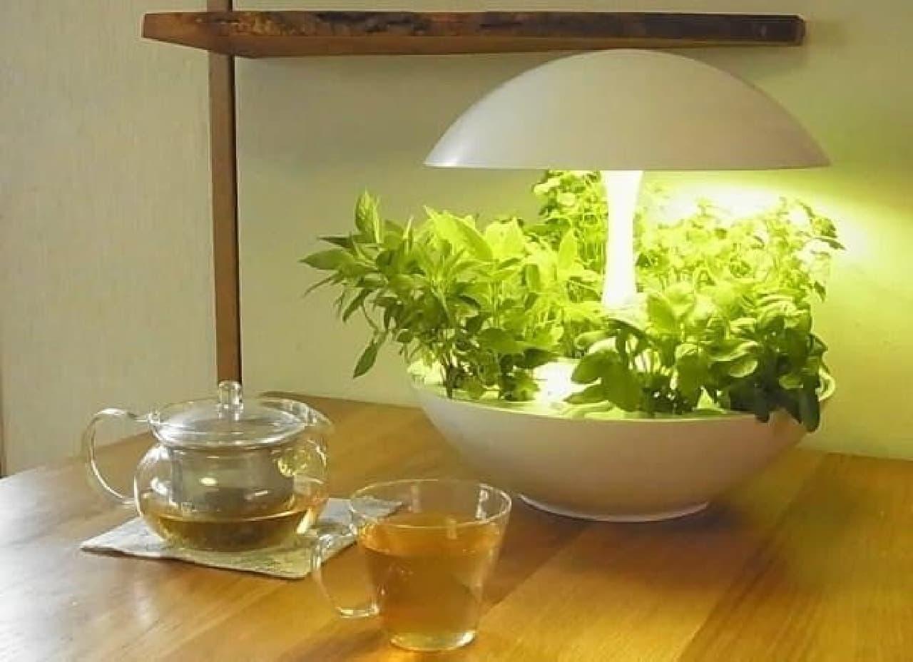 室内でオシャレに野菜が育てられる「Terrara」