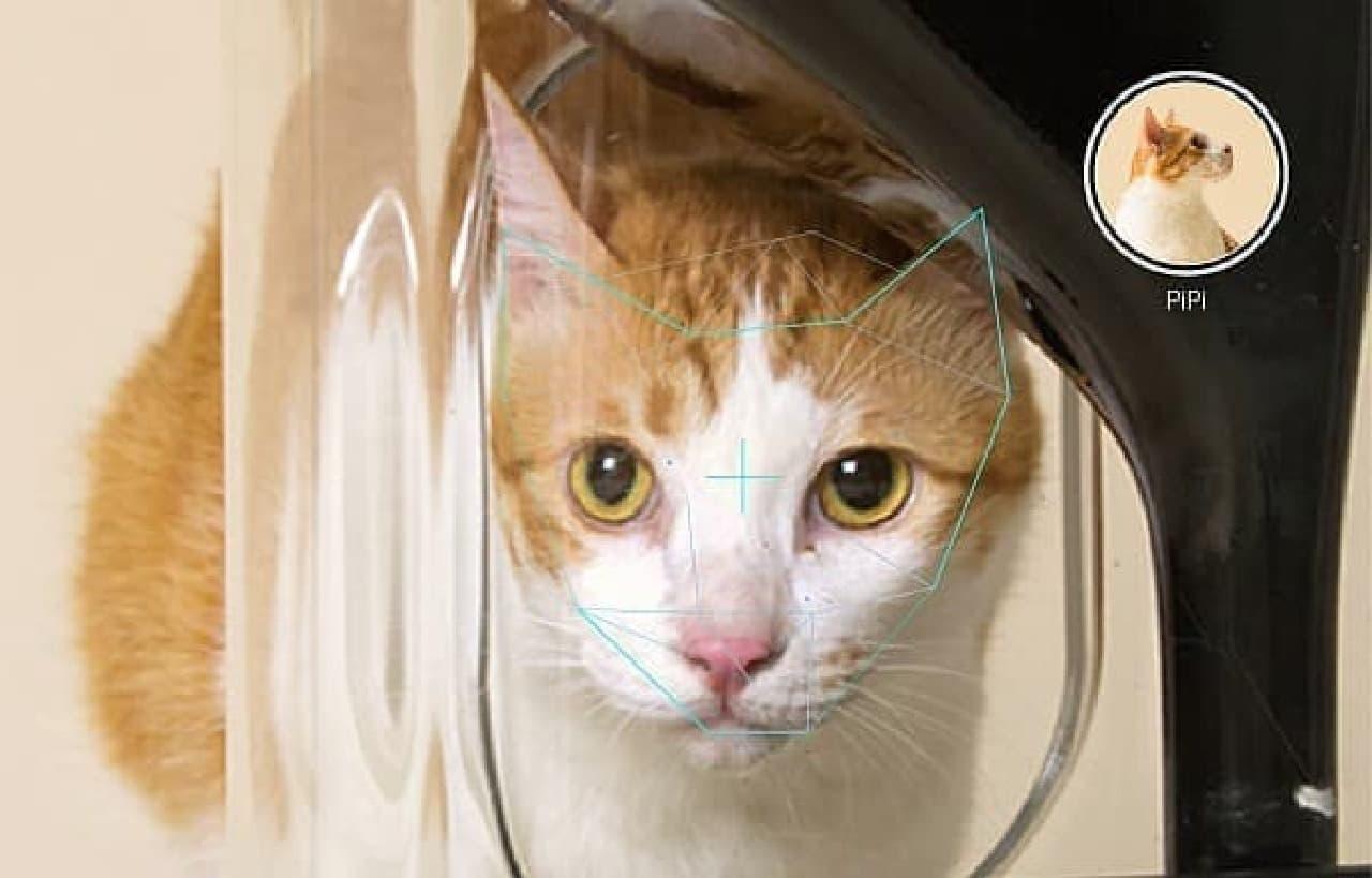 カメラに映った猫が「PiPi」だと認識している様子