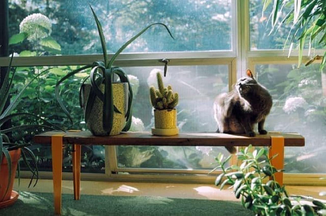植木台を作ることができる