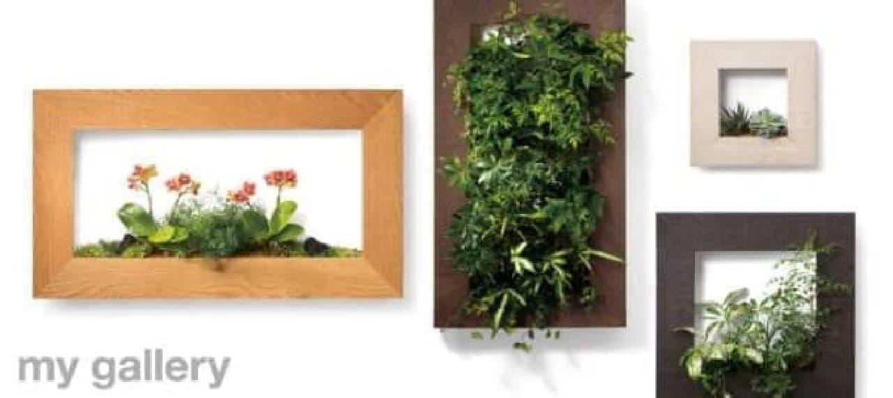 定期宅配サービスもある壁掛けインテリア「my gallery」