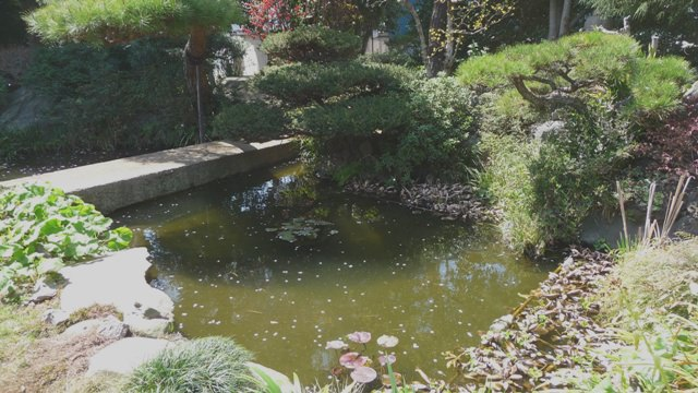 敷地内に配置される「日本庭園」